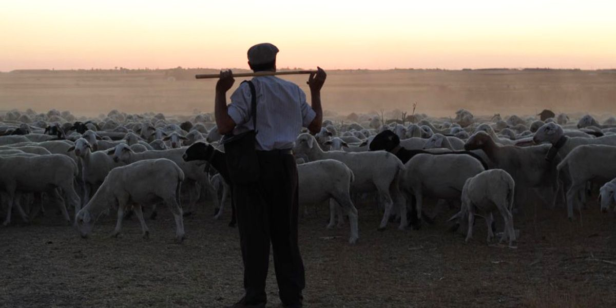 The Shepherd looks over his flock in this new Spanish thriller
