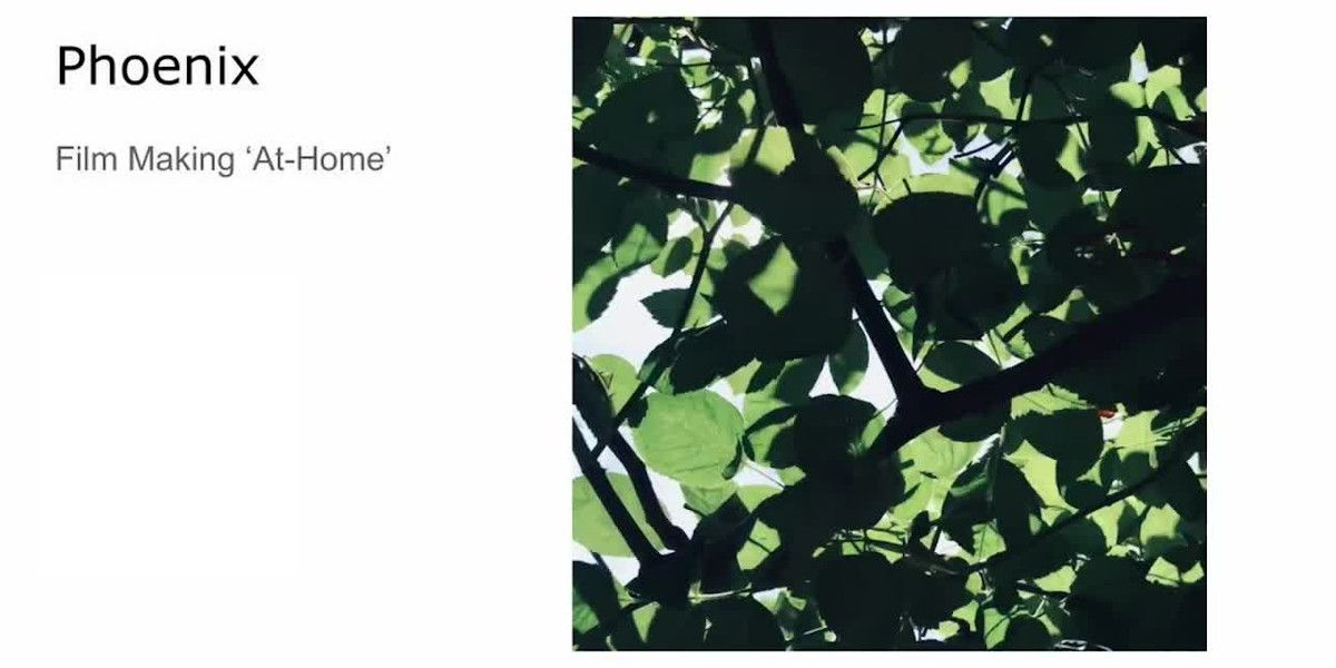 An image of leaves in shadow, with the text